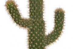 193CAN70216_Kaktus (L92) 76x40x12cm_8pcs_GREEN