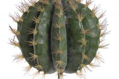 193CAN70264_Kaktus 50-30 (34x34)cm_4pcs_GREEN