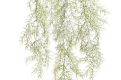 87CAN016_02_Asparagus zwisający 104cm_144-24pcs_D